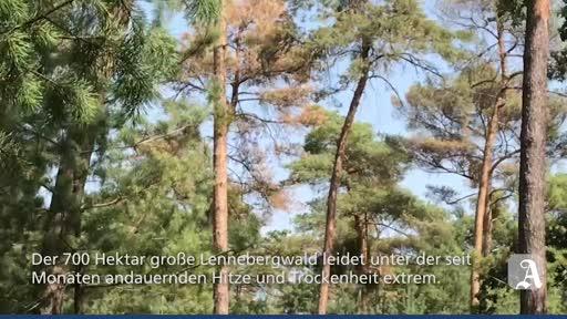 Dürreschäden im Lennebergwald