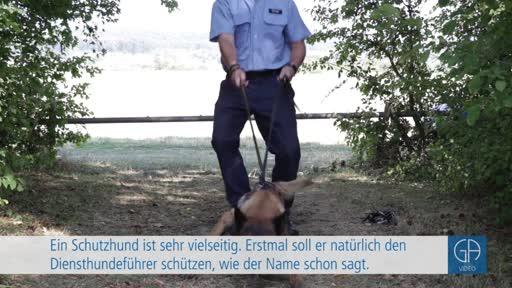 Polizeihunde - Unerschrocken und Respekt einflößend