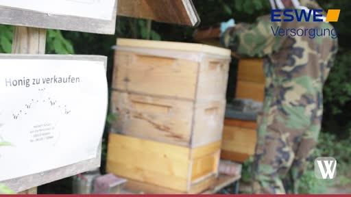 So sieht es in einem Bienenstock aus