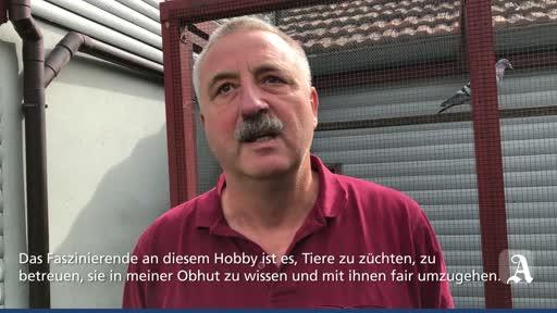 Brieftaubenzüchter aus Gau-Odernheim äußert sich  zu Vorwürfen der Tierquälerei